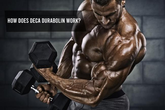 Deca Durabolin - Does it work?